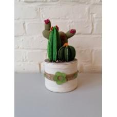 Cactussen in vilt
